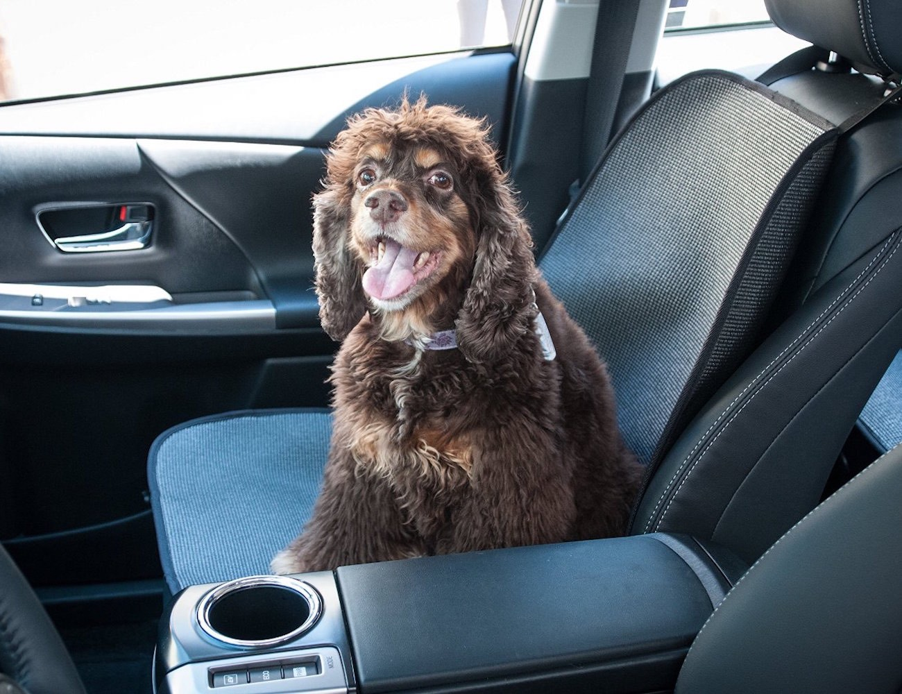 Stayjax Front Seat Protective Cover