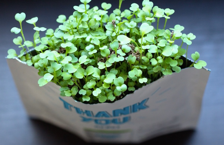 Gift-a-Green – The Greeting Card That Grows… into Edible Greens!