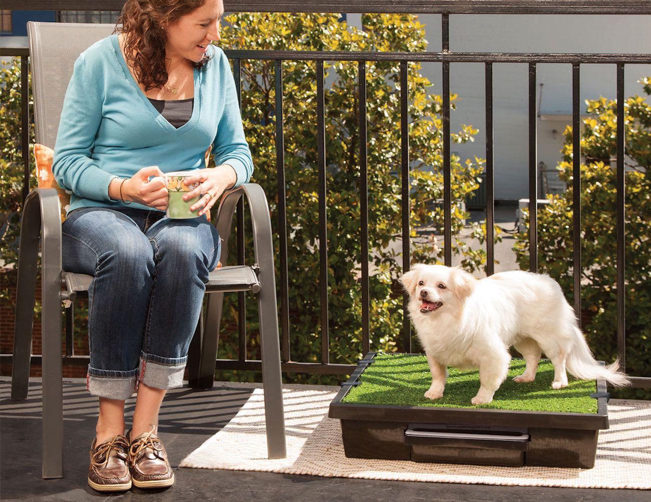 PetSafe Portable Pet Potty