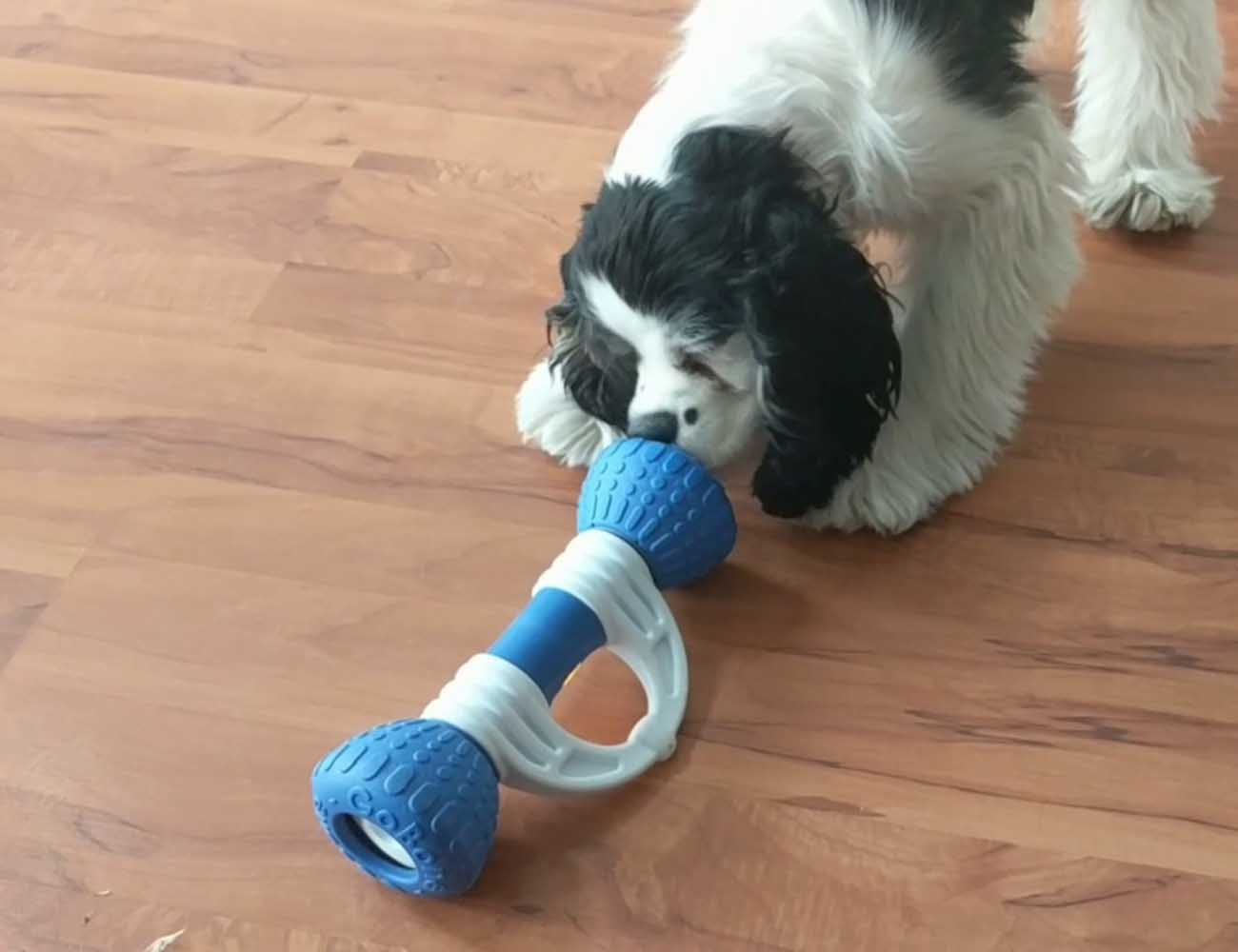 GoBone Interactive Dog Toy