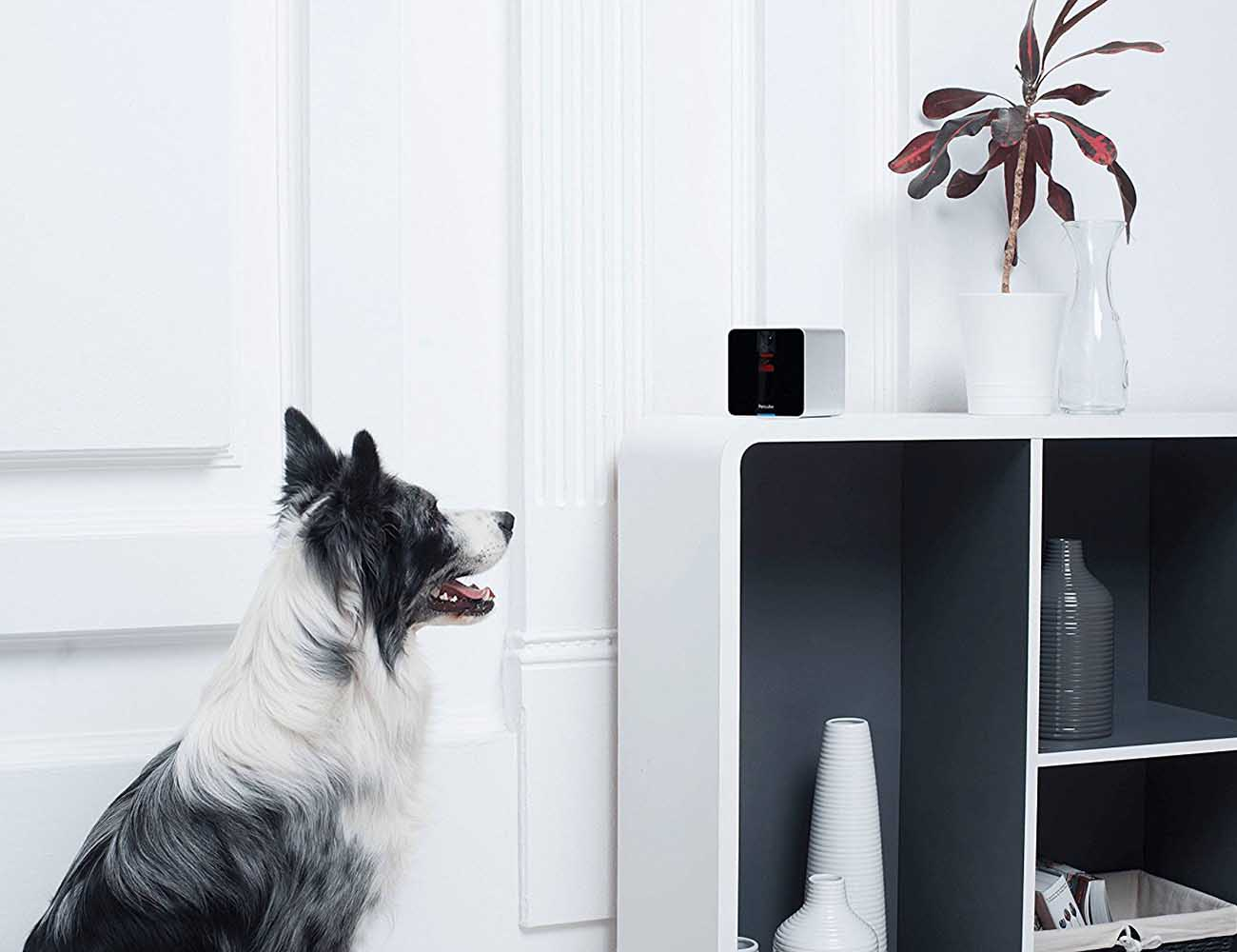 Petcube – Remote Wireless Pet Camera