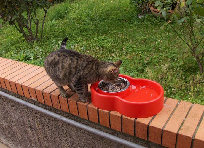 Eureka+%26%238211%3B+The+Best+No-Ants+Bowl+Ever+For+Cat+%26amp%3B+Dog