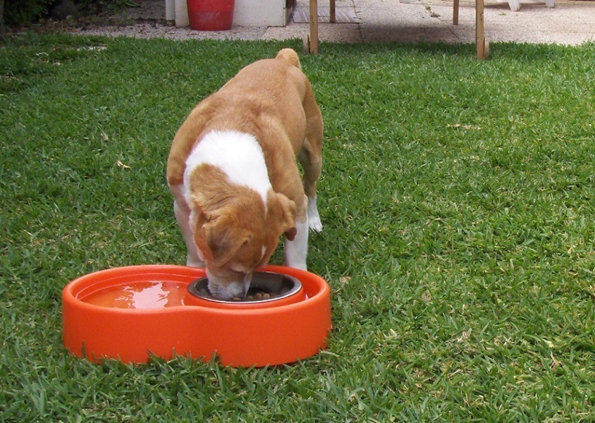 Eureka – The Best No-Ants Bowl Ever For Cat & Dog