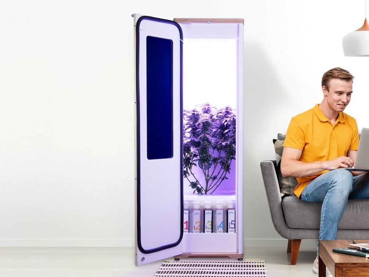 Grobo Premium smart indoor garden uses a hydroponic growing technique