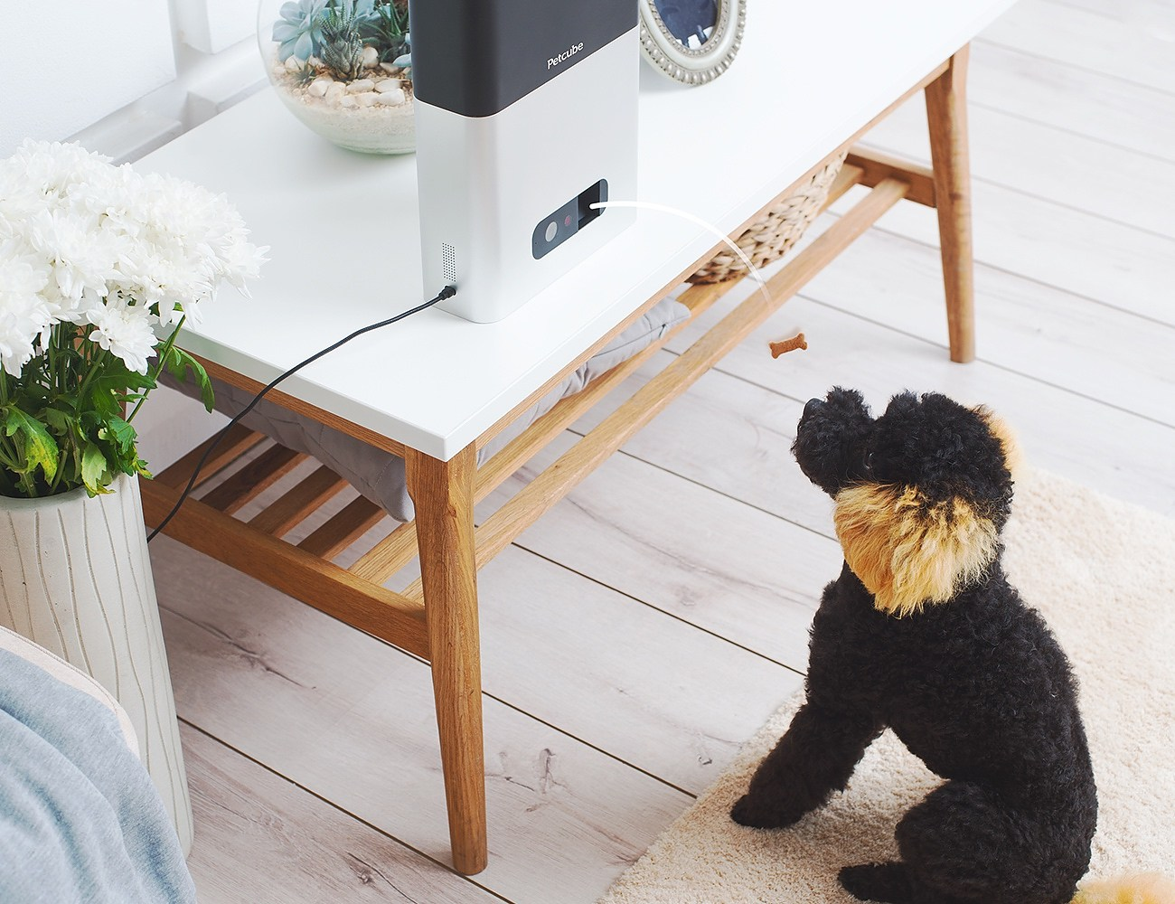Petcube Bites + Petcube Play – Treat & Care for Pets Remotely