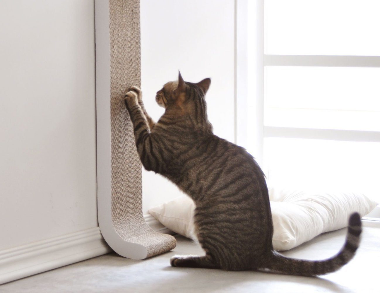 4claws Wall Mount Cat Scratching Post Review 187 The Gadget Flow