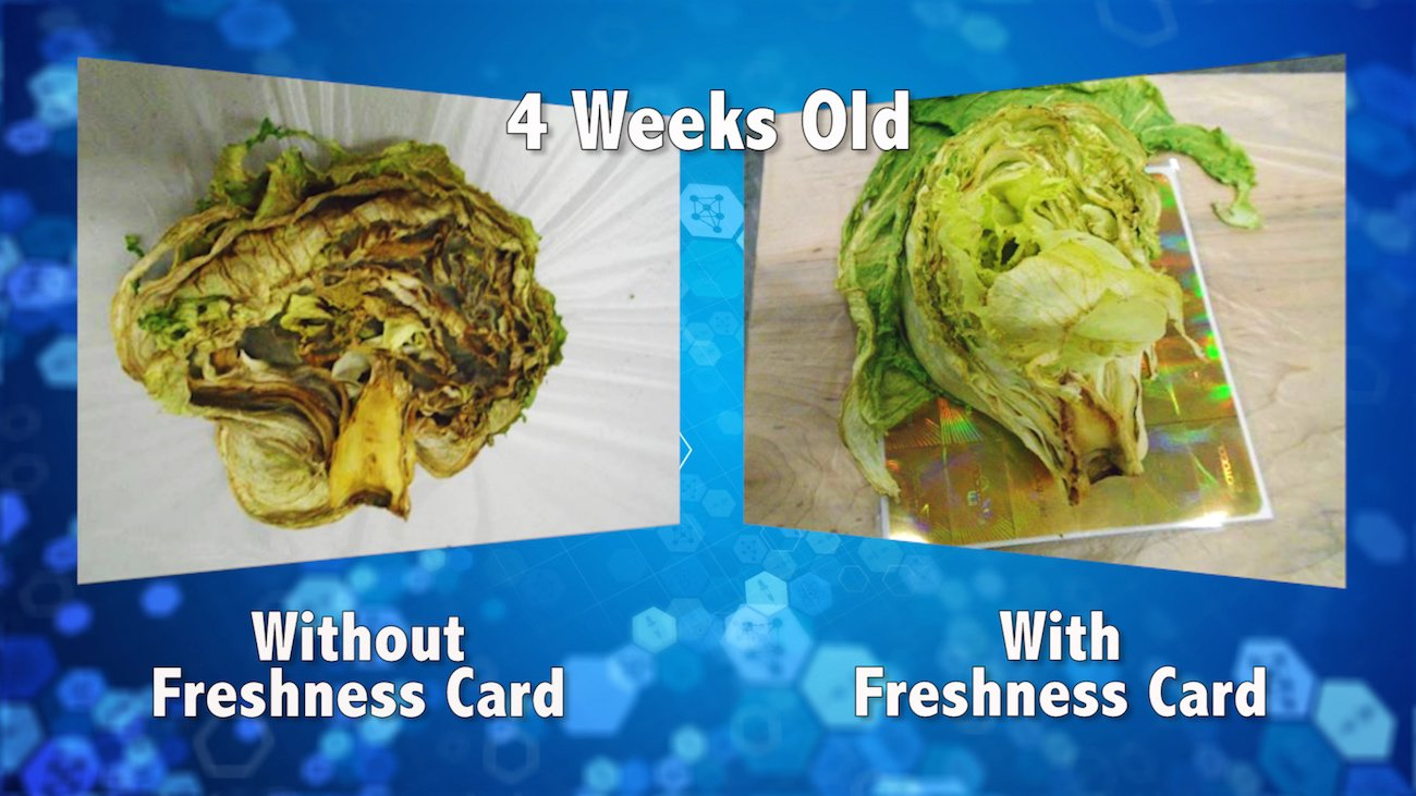 FOOD FRESHNESS CARD – Keeps Your Food Fresher Longer