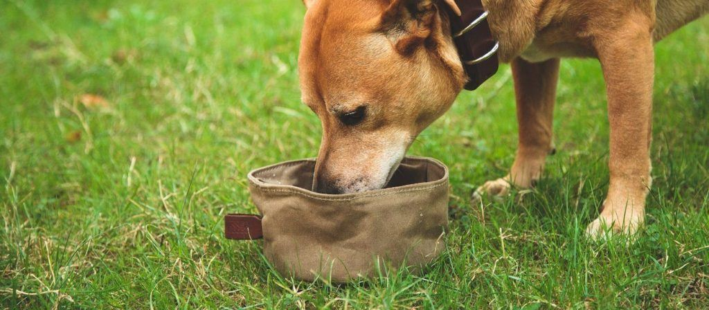 tanner-goods-canine-bowl