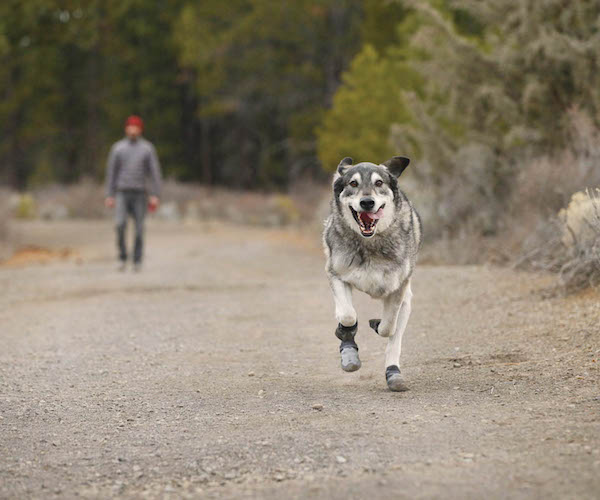 summit-trex-dog-boots-for-the-outdoors-from-ruffwear