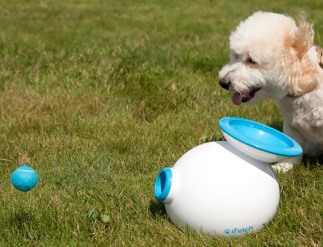 iFetch Too Interactive Ball Thrower for Large Dogs