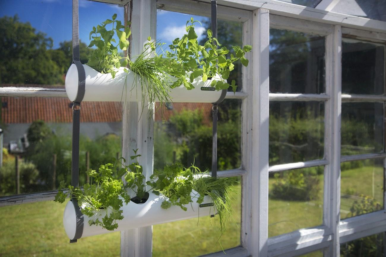 Herbster – The Hanging City Garden
