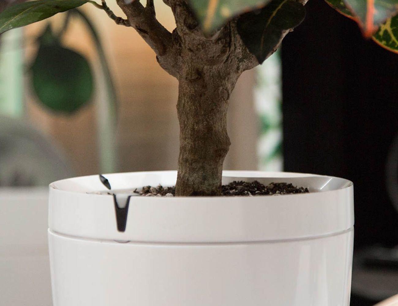 Parrot Pot Connected Flower Pot