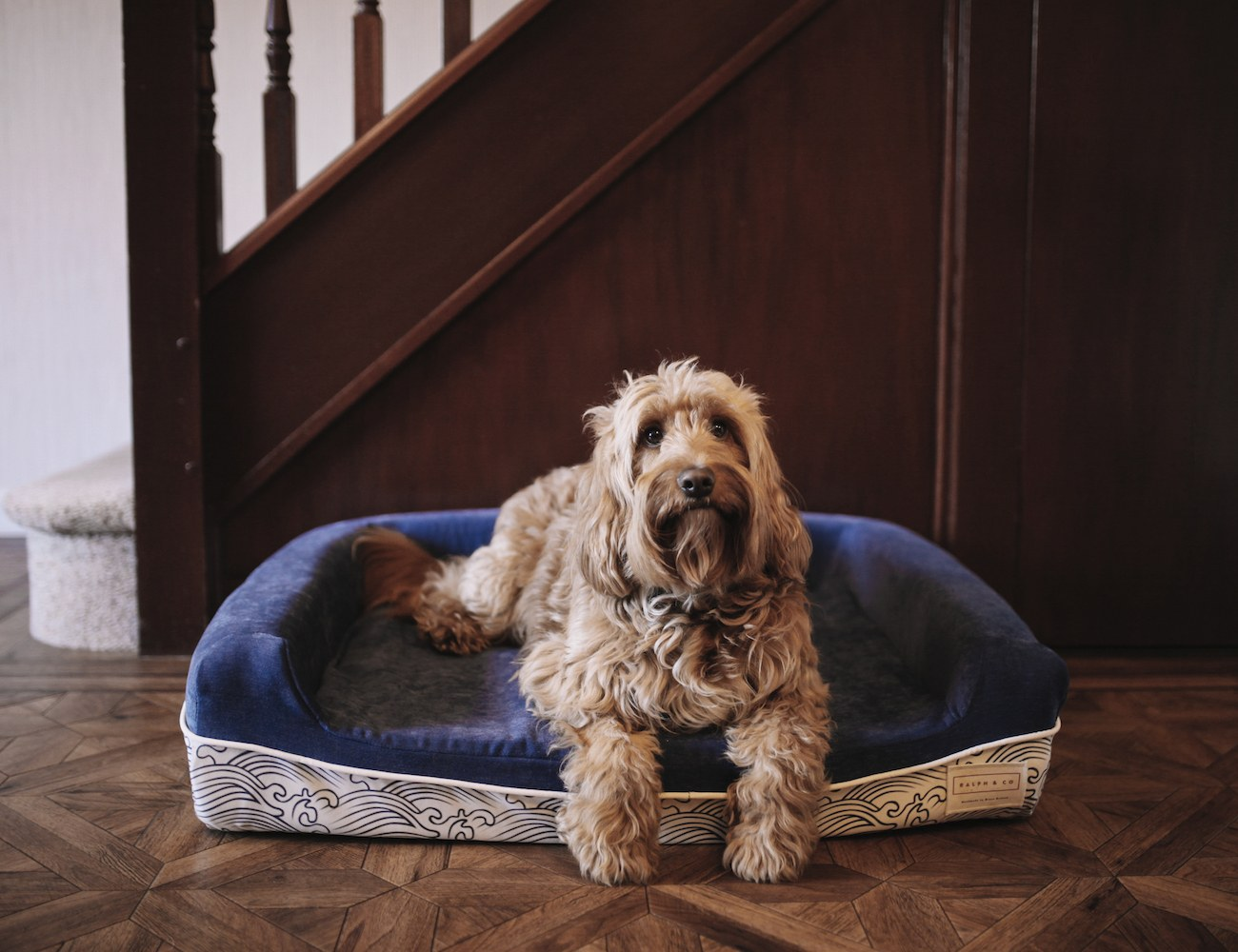 The World's Best Dog Bed by Ralph & Co