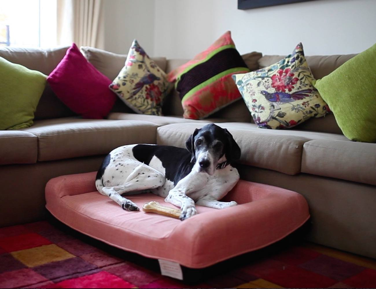 The World S Best Dog Bed By Ralph Amp Co 187 Gadget Flow