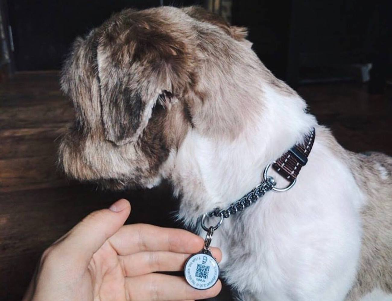badge Smart Pet ID Tag