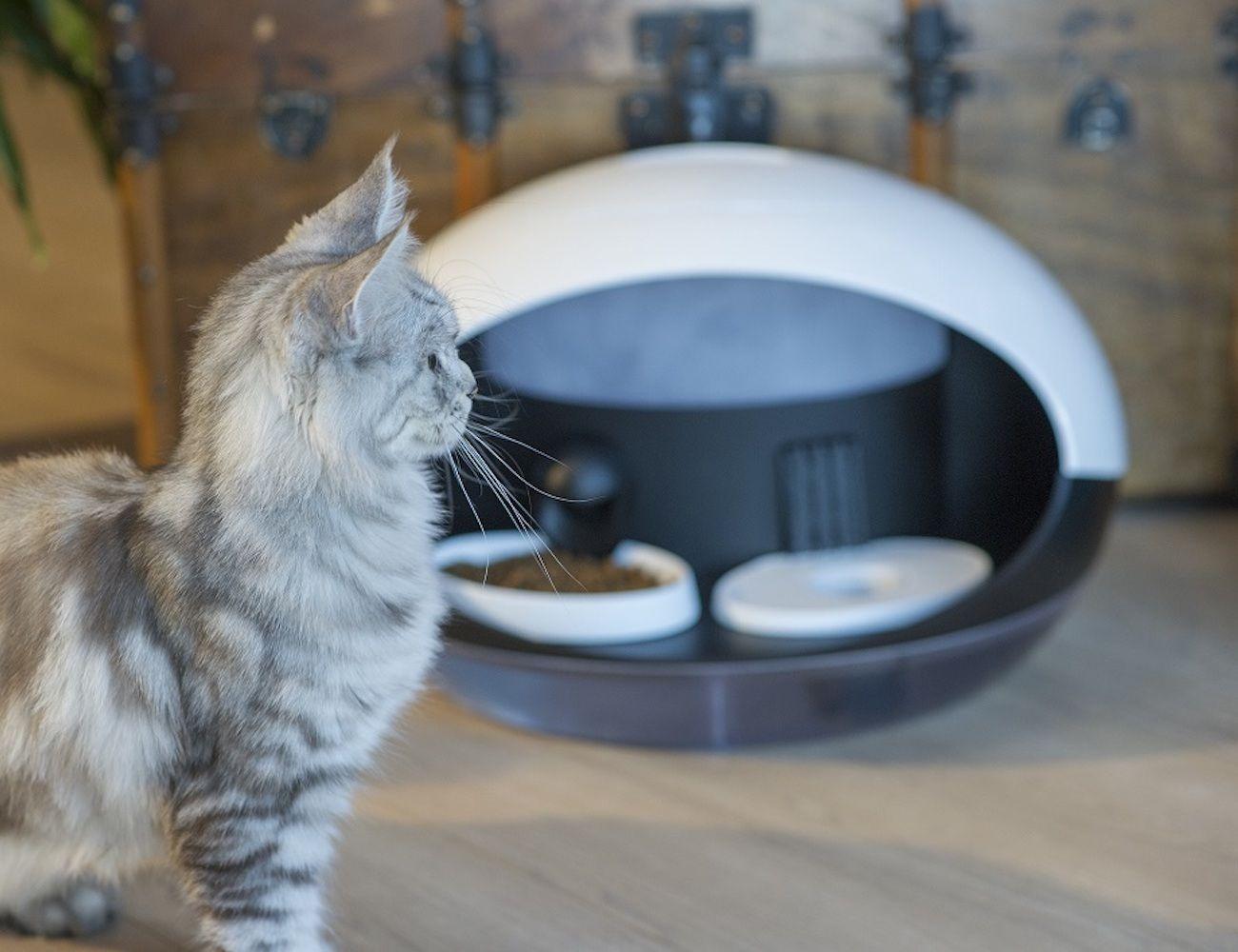 Catspad Automatic Cat Feeder