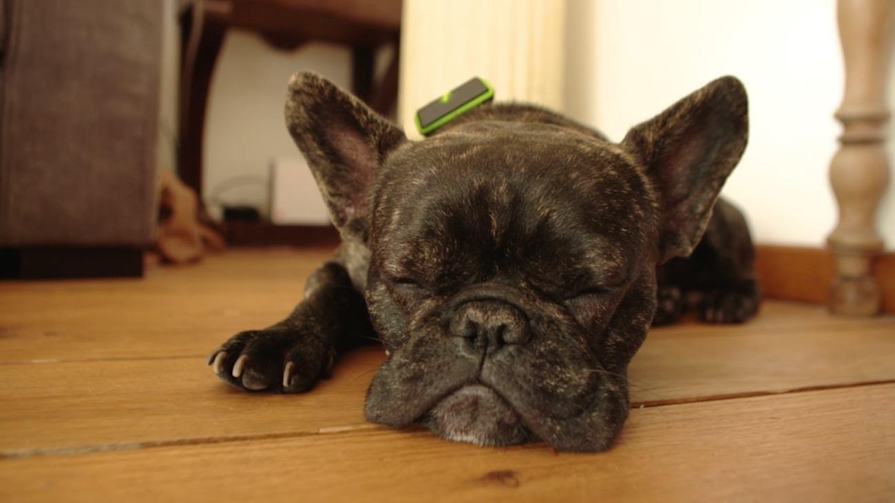 Jagger & Lewis Smart Dog Collar