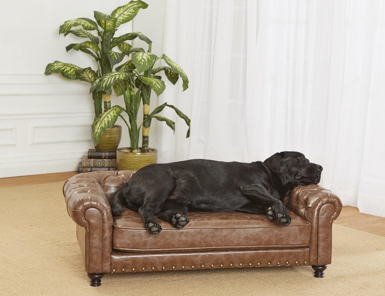 Dog+Sofa