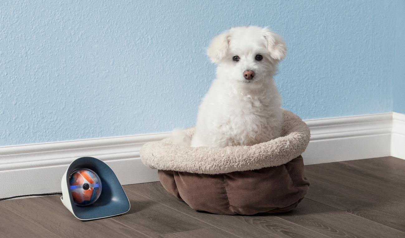 Pebby Robotic Pet Sitter