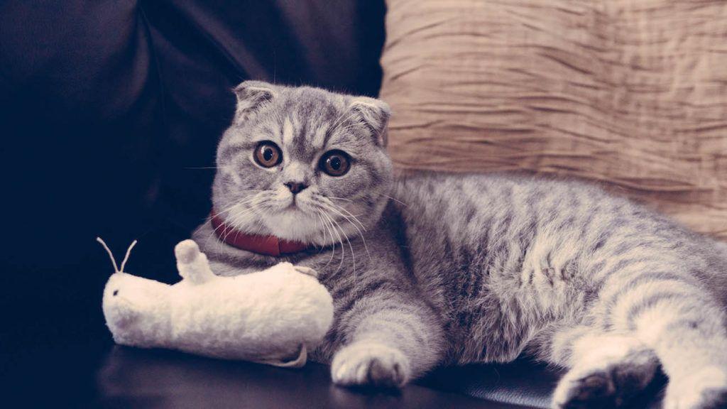 mini smart pet collar