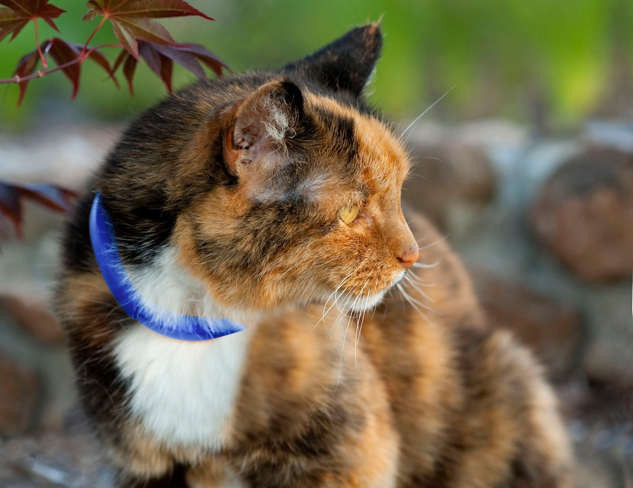 The Scollar Mini Smart Pet Collar Helps Your Pet at Every Stage