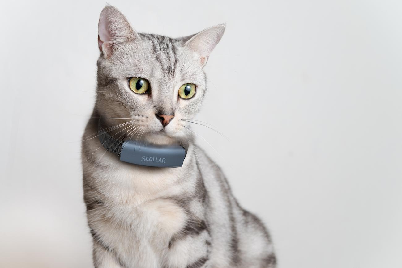 Scollar Mini and Scollar Trek Smart Pet Collars