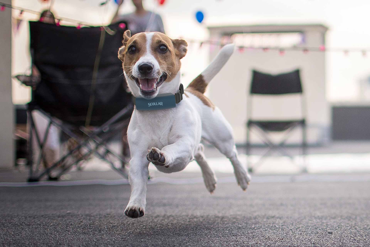 Learn How Lisa Tamayo Kickstarted Her First Hardware Product for Pets