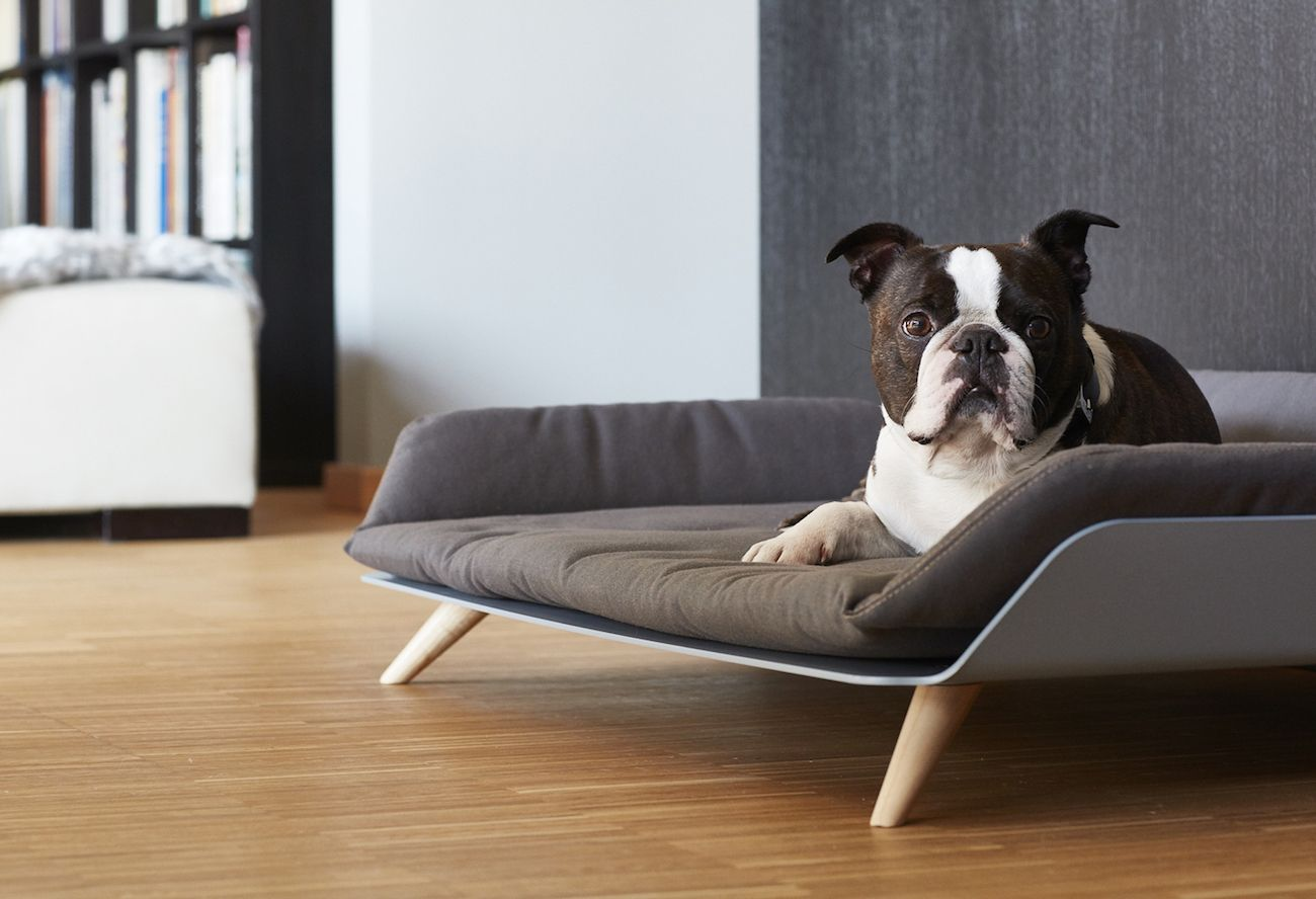 letto daybed modern dog bed » gadget flow - letto daybed modern dog bed
