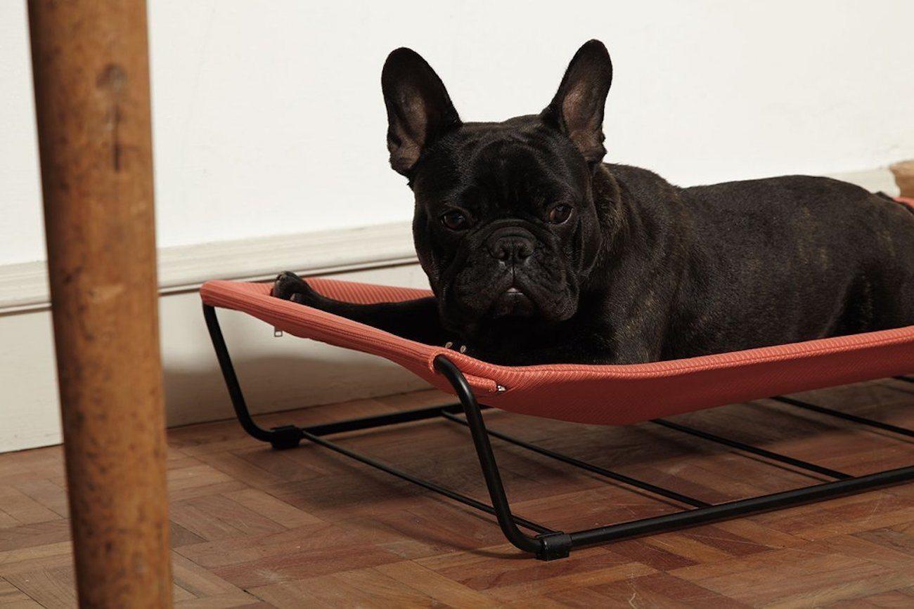 My Territory Steel Dog Hammock