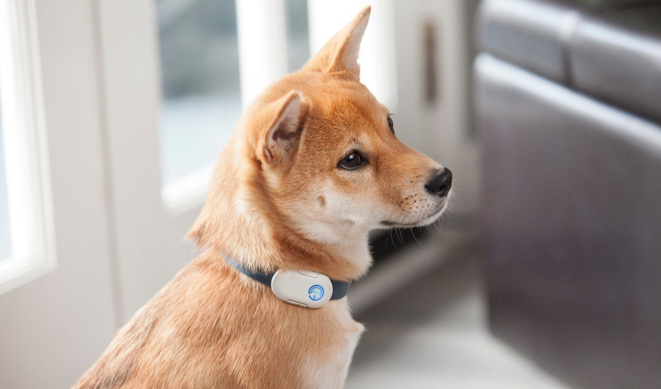 Pebby Robotic Pet Sitter Keeps Your Pet Company All Day