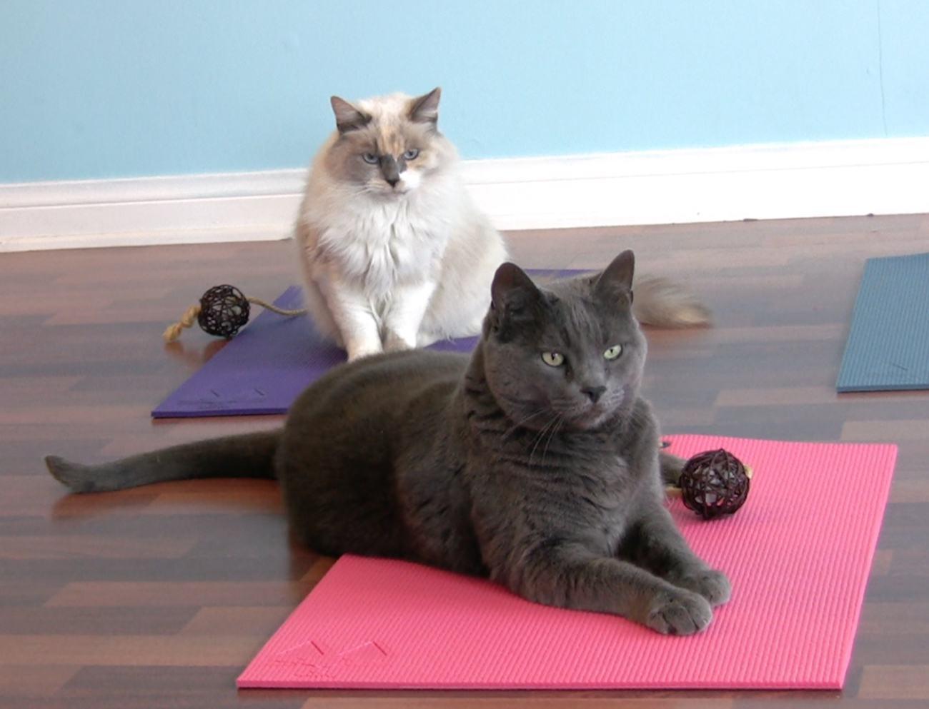 Feline+Yogi+Cat+Yoga+Mat