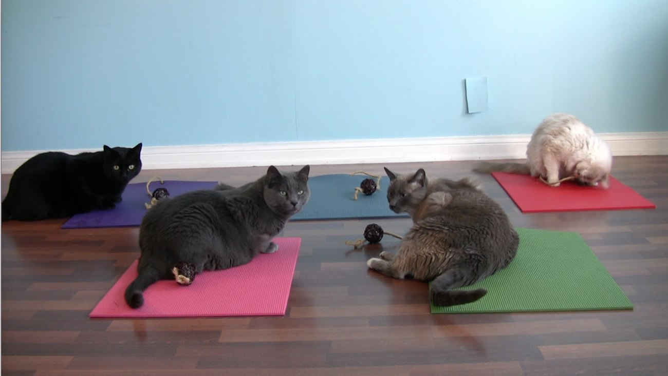 Feline Yogi Cat Yoga Mat