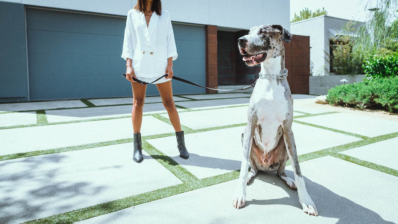 Killspencer Leather Dog Collection