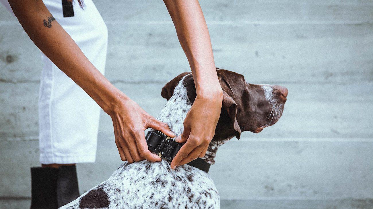Killspencer Leather Dog Collection