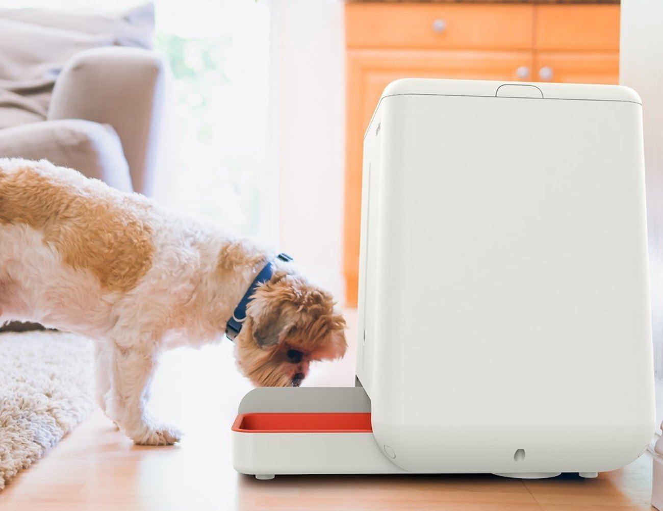 easyFeed Automatic Pet Feeder