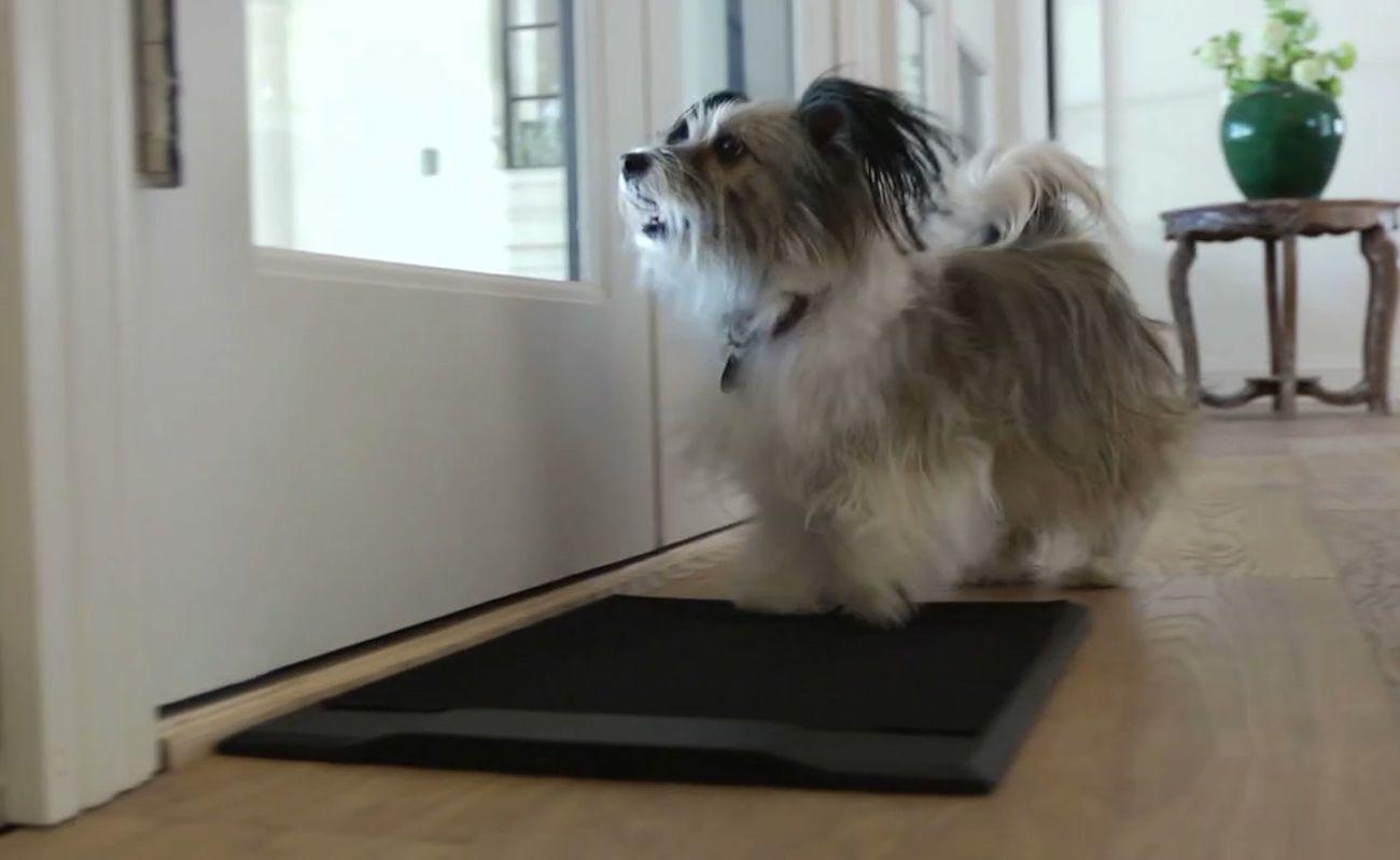 Barking Mat Dog Housebreaking Tool