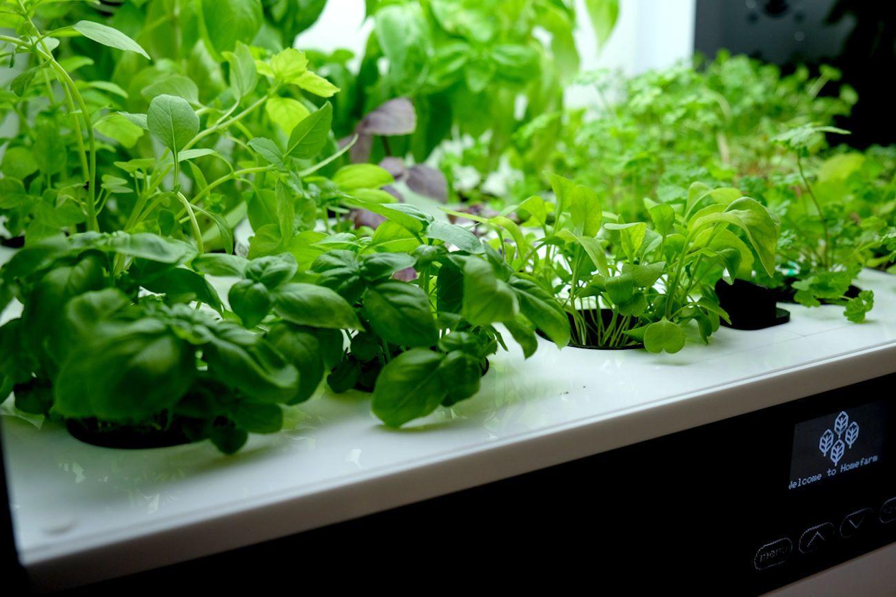 Perfect Homefarm Home Hydroponic Garden · Homefarm Home Hydroponic Garden