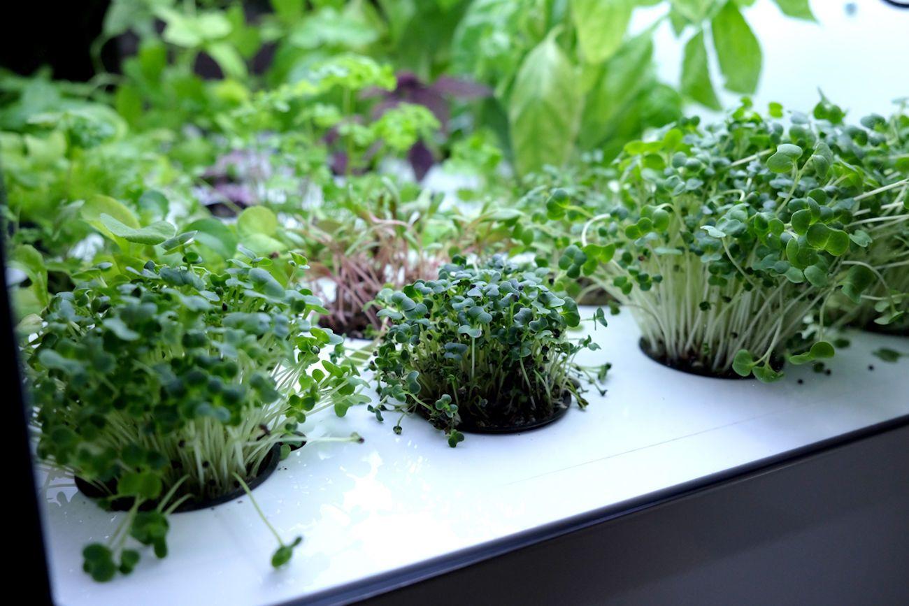 Homefarm Home Hydroponic Garden