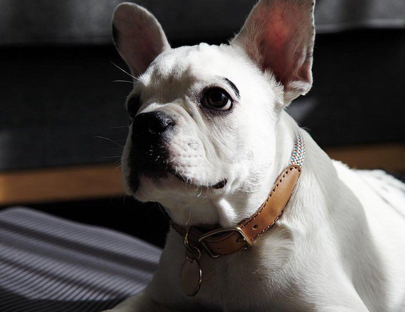 Howlpot We Are Tight Dog Collar