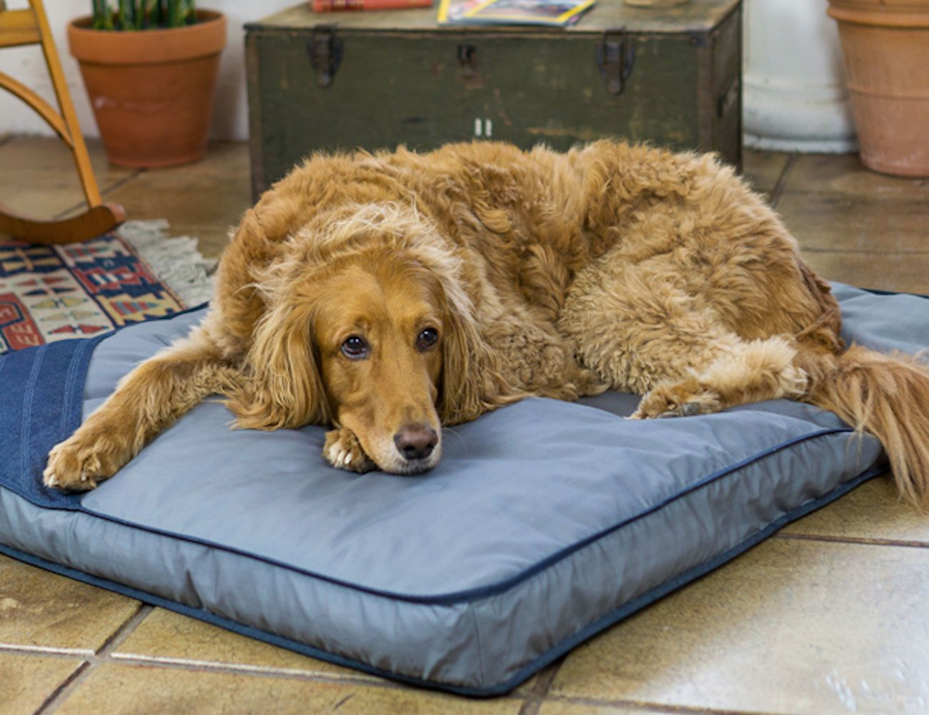 Toad Co Eco Sustainable Dog Bed