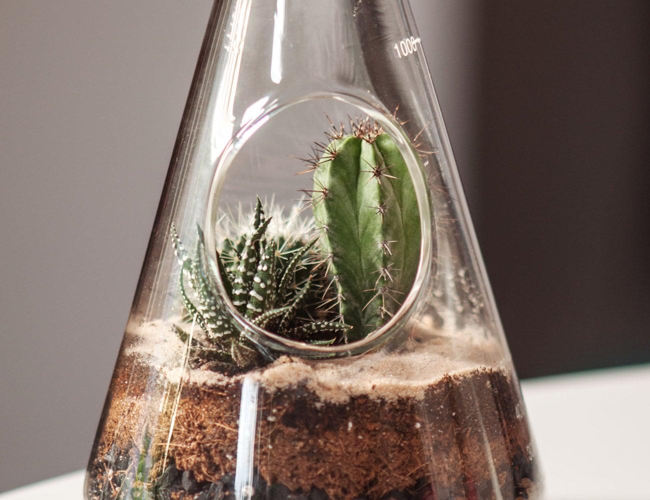 SUCK UK Chemistry Eco-System Terrarium