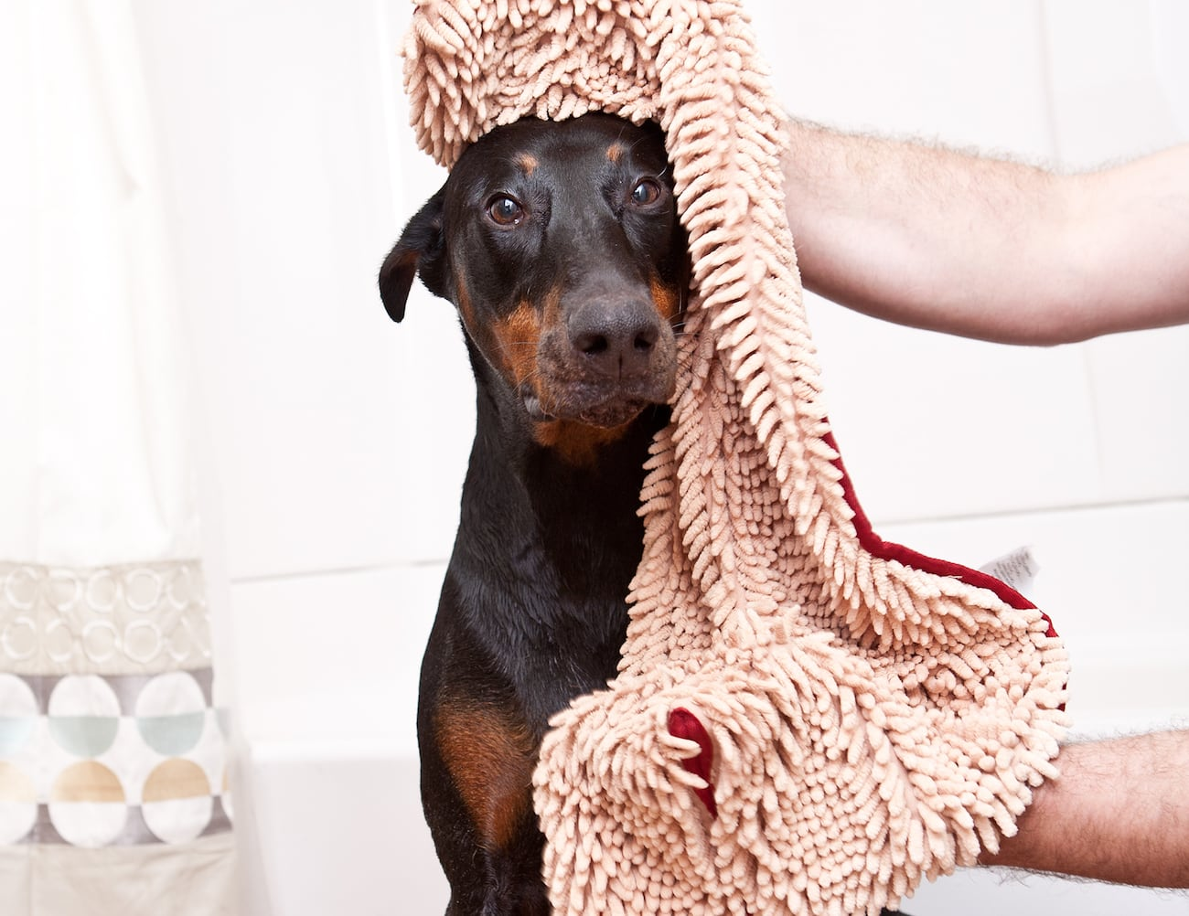 Soggy Doggy Wet-Dog Solutions