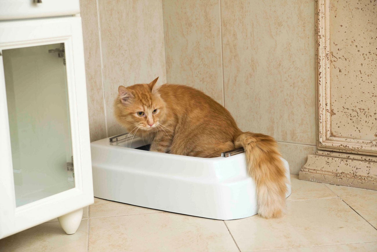 CATOLET Smart Automatic Litter Box