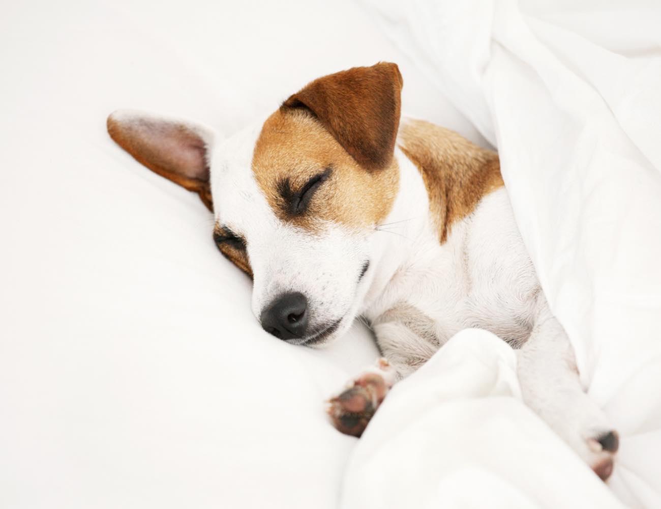 ERIC&GUSTAF Luxury Bed Linen