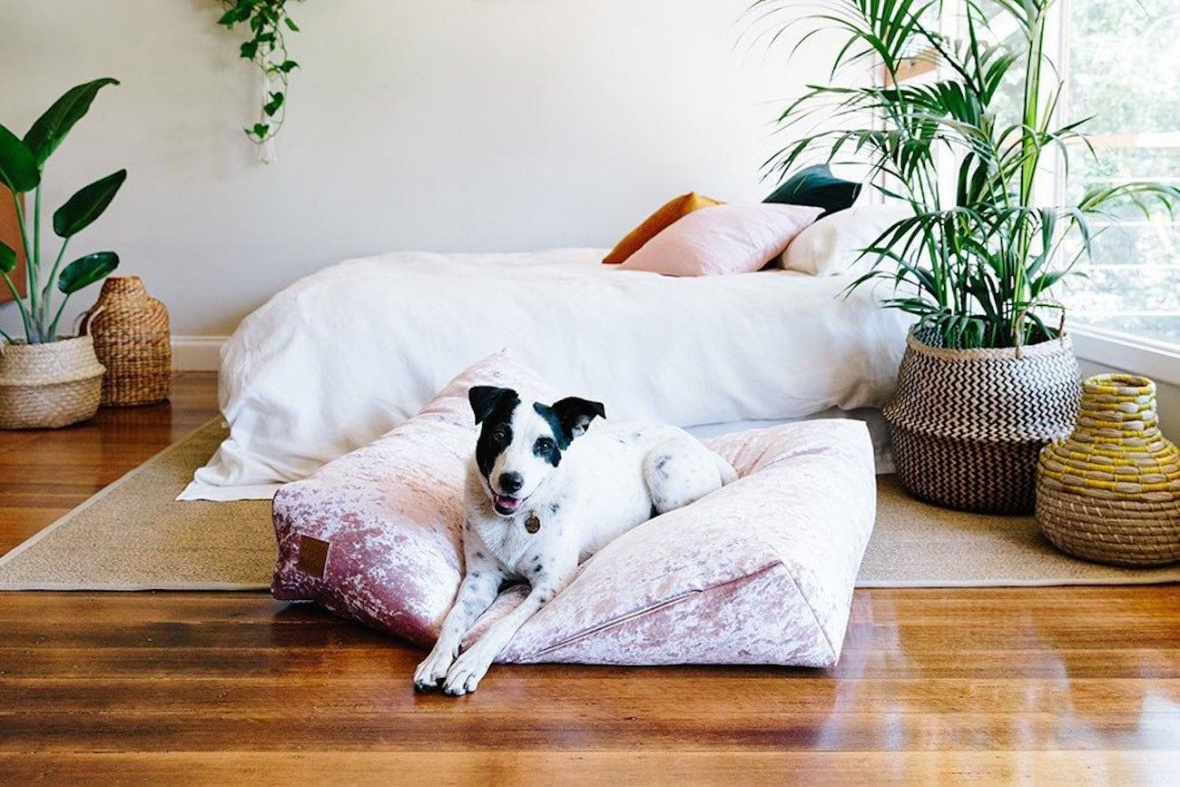 Nice Digs Velvet Slouch Dog Bed