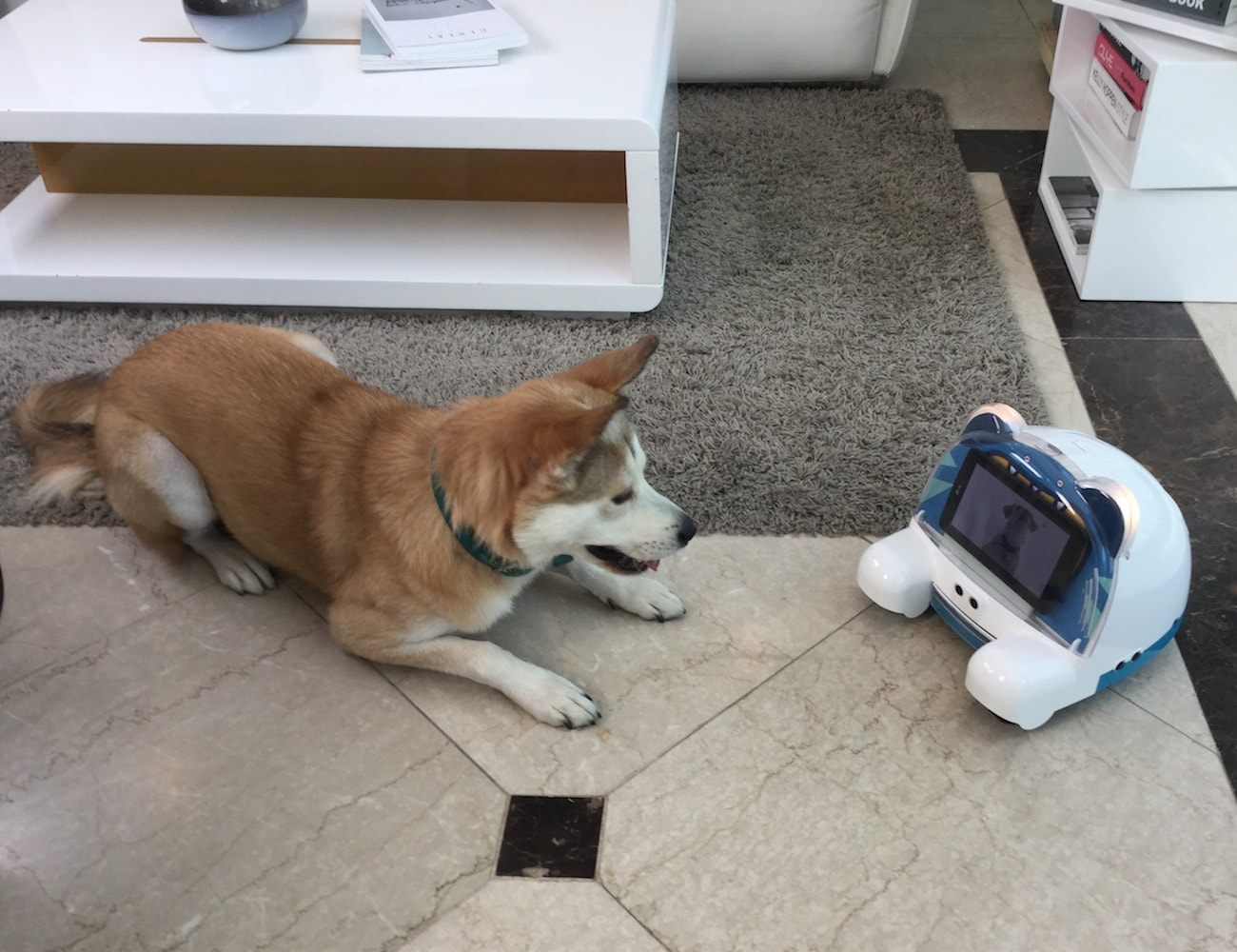 PEDDY Smart Pet Companion Robot