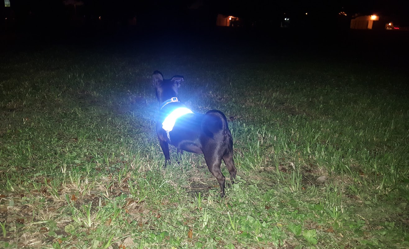 K-9ite Dog LED Safety Belt