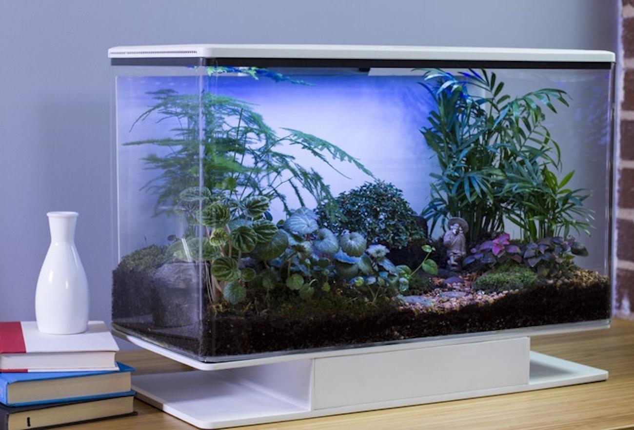SmartTerra Customizable Smart Terrarium