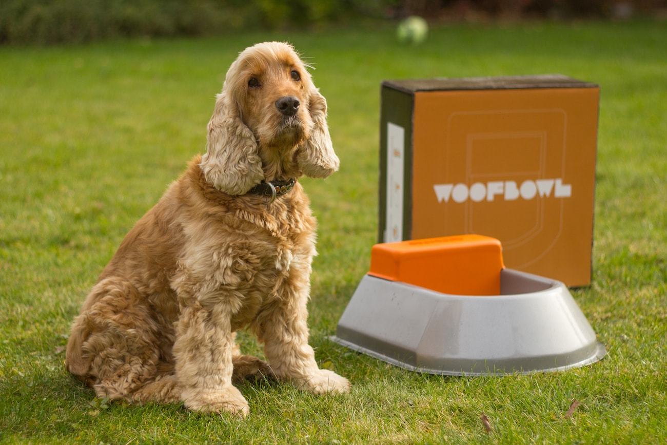 Woofbowl Auto-Fill Water Bowl