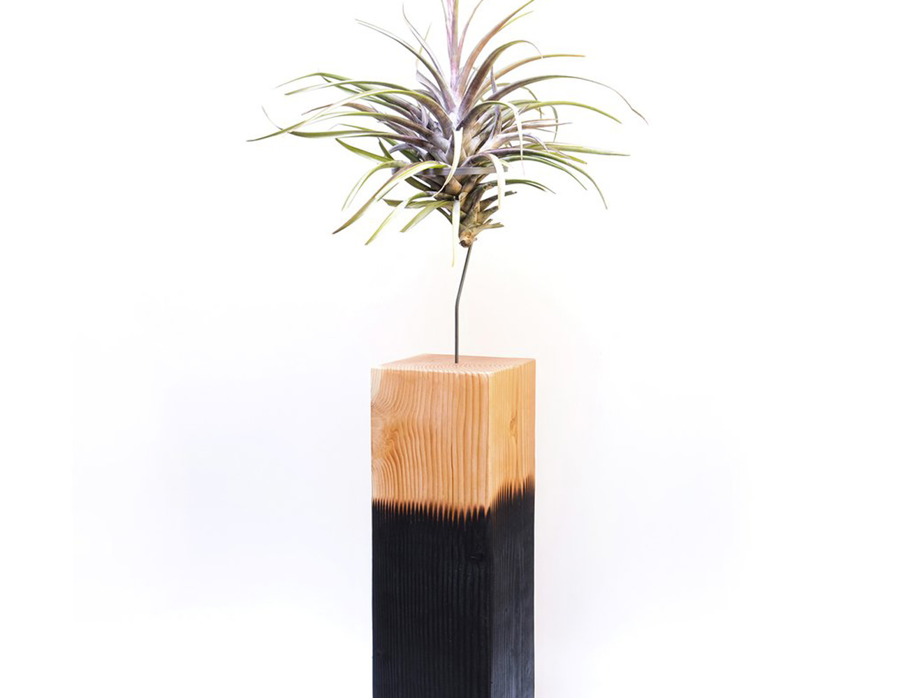 AirplantVessel Giant Handmade Wood Planter